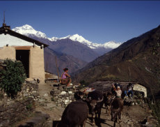 On the trail to Annapurna Base Camp, West Nepal