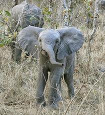Big brave elephant!