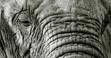 Wrinkles (Mono)
