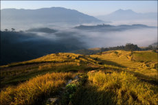Ricefields above the mist