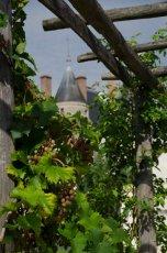 Vine and chateau
