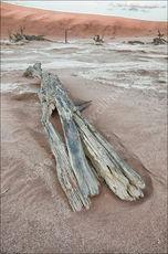 Fallen tree, Dead Vlei