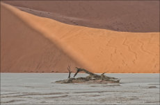 Dead Vlei Sculpture