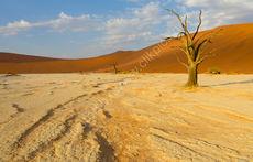 Dead Vlei Floor (landscape)
