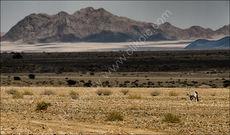 Desert Oryx No.2