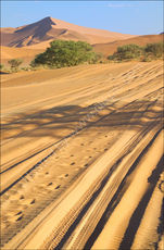 Sossusvlei tracks in the sand