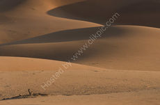 Shadows on the dunes (landscape)