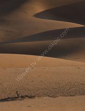 Shadows on the dunes (portrait)