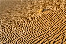 Shrub in the dune #2
