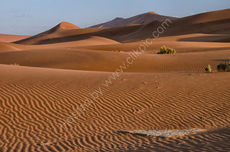 Evening in the dunes