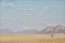 Into the desert 1