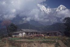 Farmstead below the Himalayas, West Nepal