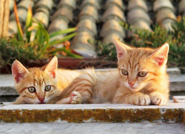 Corfu Cats