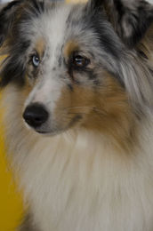 Woodmansey  pet show  14