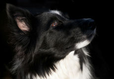 pet portrait 7