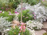 Planting in silver, pink, white and mauve