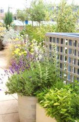 Perennial and herb container planting