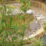 Wildlife rock pool