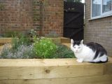 Cats love the warm timber walls