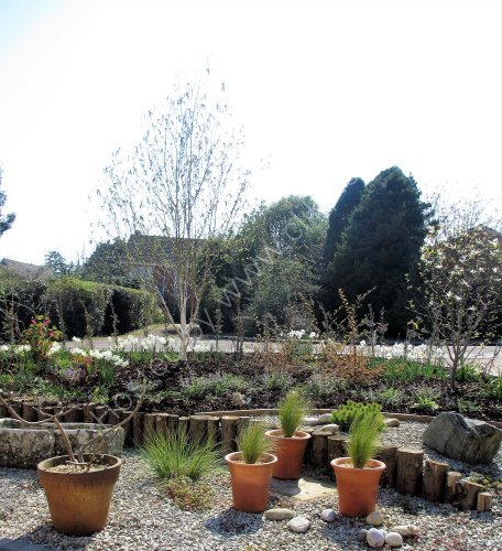 Dry garden and raised bank
