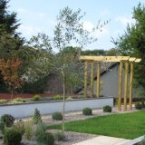 Bespoke pergola and a feature olive tree provide strong focal points