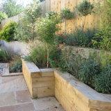 Penstemmon, Lavender, Perovskia, Wallfowers, miniature flowering Cherry, small standard Olives