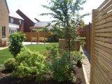 Low maintenance shrub and foliage garden