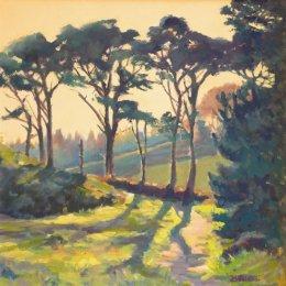 Tresco's Monterey Pines
