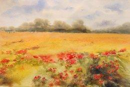 Poppyfield 1