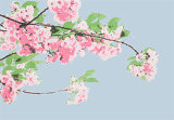 Blossom (Code B2)