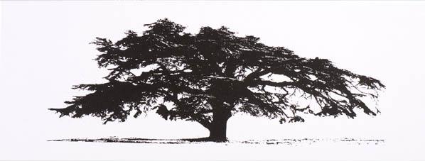 Cedar at Coombe Dingle