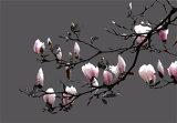 Magnolia (Code MA2)