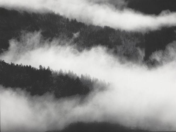 Misty Pines 1