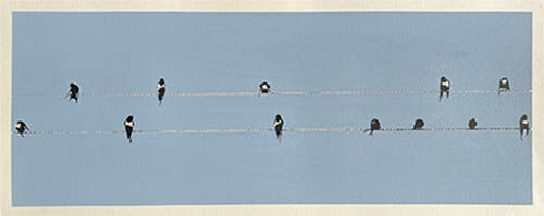 Swallows on a Line in Cornwall