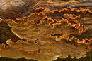 Woodland Fungus