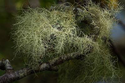 Mystery Lichen