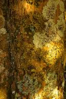 Lichens - Various