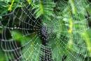 Yew & Web