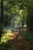 Woodland Clearing 2