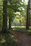 Woodland Clearing 3
