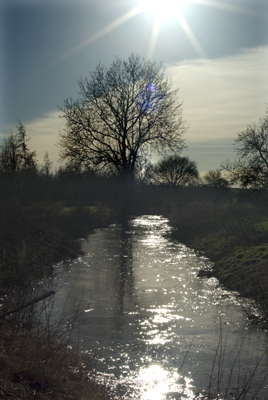 Swollen Stream