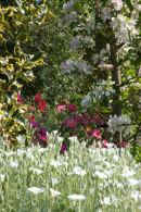 Glorious Springtime!