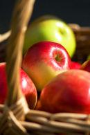 The Apple Basket
