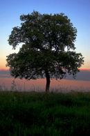 Brittany Meadow Oak