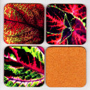 "Drinks Coasters ""Coleus Medley"""