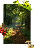 Autumn - Flitwick Woods