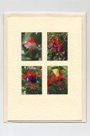 Fuchsia Medley