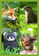 Native Mammals