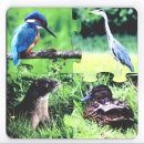 Puzzle Coasters - Riverbank Wildlife