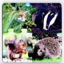 Puzzle Coasters - Woodland Wildlife